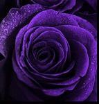 L'avatar di Viola095