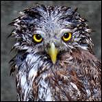 L'avatar di DT84