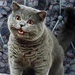 L'avatar di Gnappo