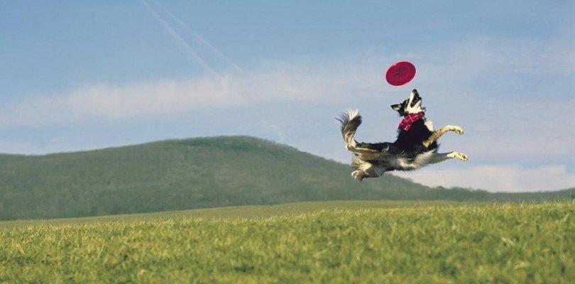 Bello! È un frisbee?