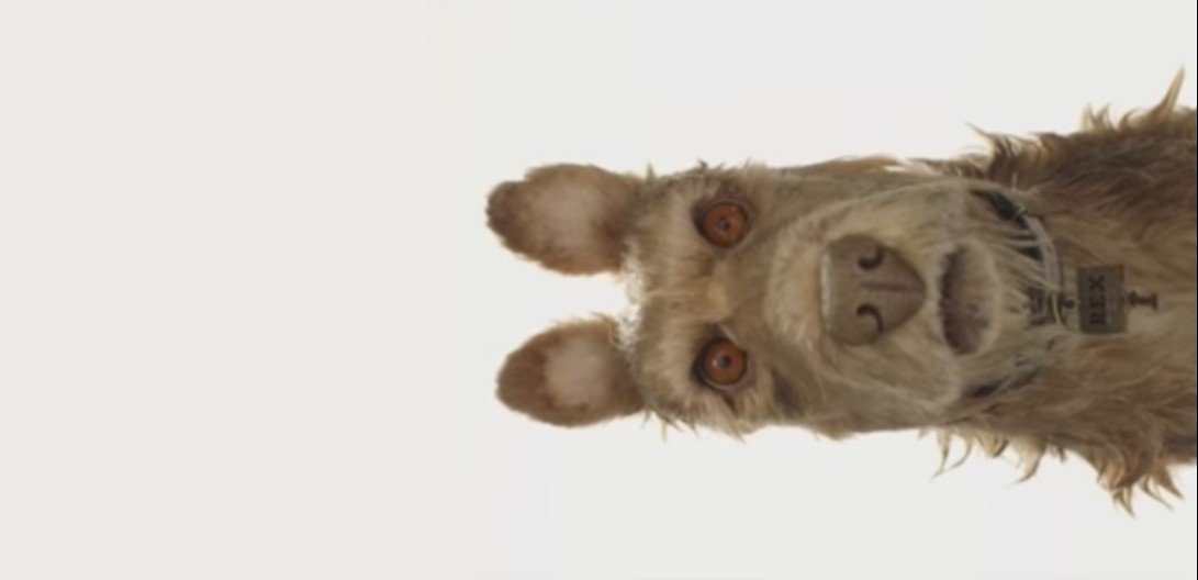 isle of dogs immagine news trailer
