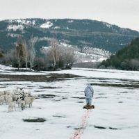 I segreti di Wind River recensione cinema